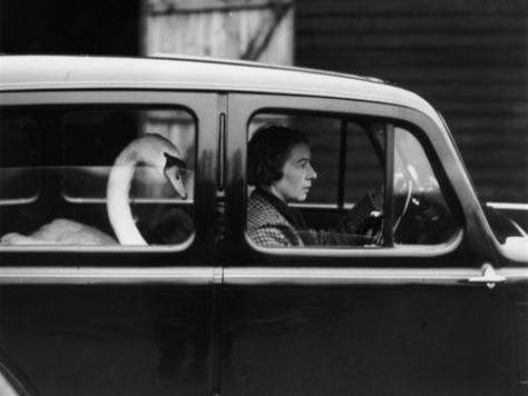 Swan In a Car, 1936, William Vanderson