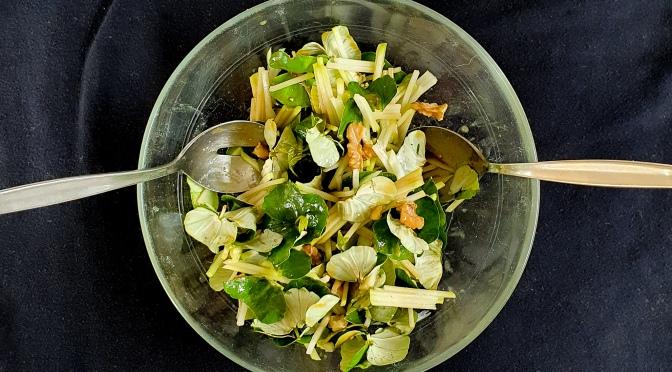 Salat mit Buchenkeimblättern