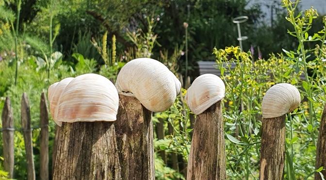 Le jardin de Mme H.  oder die Vorfreude auf Auberginen